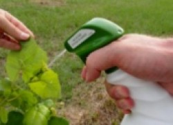 Кто покусился на урожай винограда