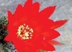 Урок любви от кактуса