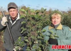Питомник семьи Филь – от хурмы до мушмулы