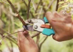 Секреты обрезки сада