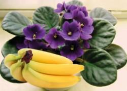 Угости свои растения «банановым коктейлем»