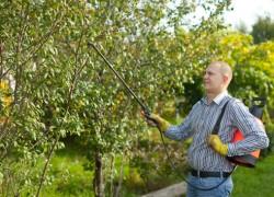 Как использовать препарат тилт в саду