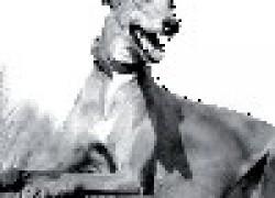 Грейхаунд - собака-скорость