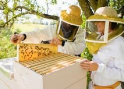 Домашнее пчеловодство