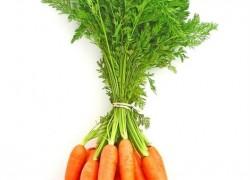Секреты урожайной моркови