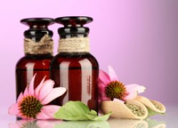 Противовирусная трава: эхинацея пурпурная