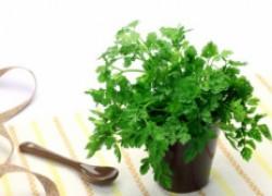 Снова пора сеять кервель и кочанный салат