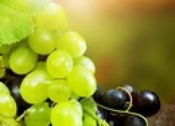 Достойному винограду достойную опору