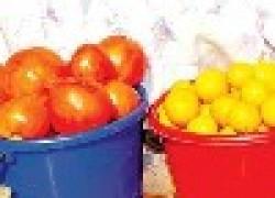 Один день из жизни помидоров