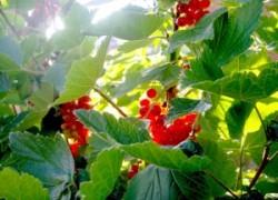 Какие растения сажают осенью