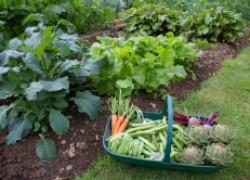 Овощи, которые спокойно растут в полутени