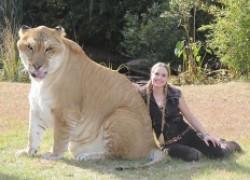 17 гибридных животных, как результат межвидовой любви