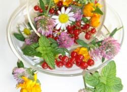 Чай из листьев земляники спасет женское здоровье