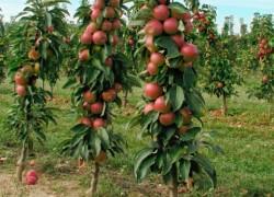 Какие яблони посадить в этом сезоне