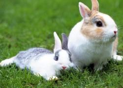 Как сделать кормушку для кроликов (видео)