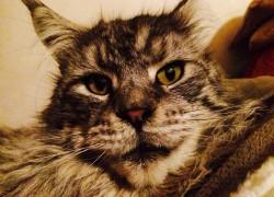 Счастливая история блудного Кота