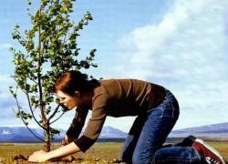 Надо ли утаптывать почву после посадки?