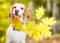 Посмотрите, как нужно радоваться осени!!!