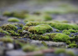 На земле появился какой-то зеленый налет