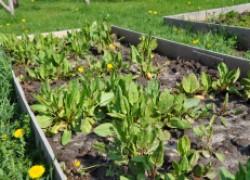 Без перекопки почва стала плодородней и «жирнее»