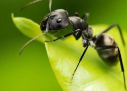 Как защитить цветы от муравьев