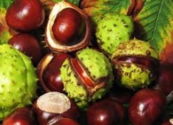 Рецепт настойки из конского каштана от варикоза