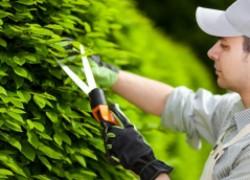 Сад и огород: берем с собой на работу