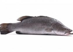Свежая рыба от La Maree