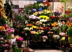 Как создать бизнес на выращивании цветов