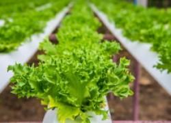 Открываем собственный бизнес по выращиванию зелени на продажу