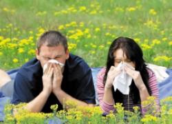 Сенная лихорадка: провоцирующие факторы и способы борьбы с симптомами. Часть 1