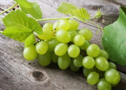 Спасатель винограда – новая защита лозы