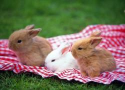 Наш кролик себя агрессивно ведет