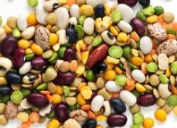 Выращивание бобовых на семена