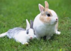 Мои кролики погибли в судорогах