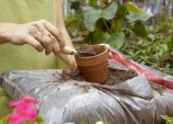 Рассчитываем дозы вносимых удобрений