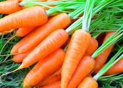 Советуем посадить сорт моркови Любимица