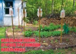 Делаем капельный полив своими руками (подкормка огурцов под корень)