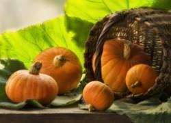 Сроки сбора тыквы