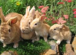Болеют мои кролики – не знаю, как помочь