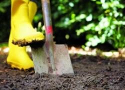 Осень: копать участок или оставить до весны?