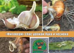 «Фитоверм» спас урожай лука и чеснока