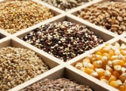 Выбираем семена: плазменные, дражированные, инкрустированные, на ленте...