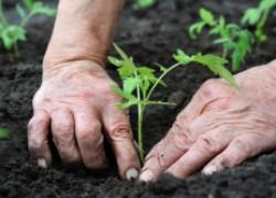 Пора начинать готовить почву для рассады