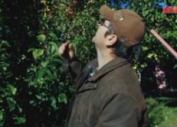 Осенняя обрезка сада. Как снизить крону дерева
