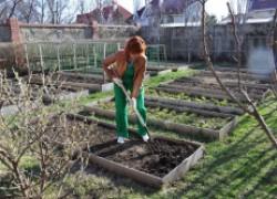 Два способа рассолить и оздоровить почву