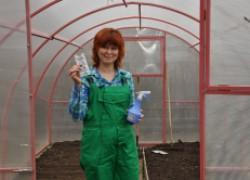 Сидераты и фитоспорин спасут почву от фитофтороза