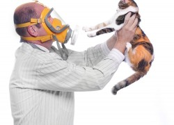 Миссия выполнима: Завести питомца и не «поймать» аллергию