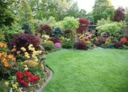 12 садовых растений, которые могут вас убить