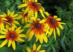 11 лучших садовых растений, которые будут цвести все лето